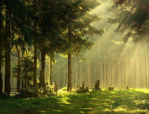 Wandern im grünen Herz Deutschlands